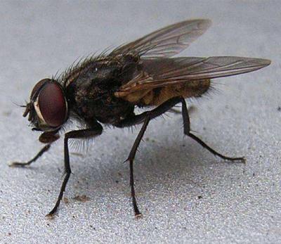 苍蝇小.jpg